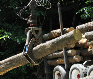 white ash logs loading on a logging truck 300x257